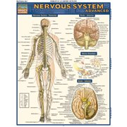 BarCharts 9781423215066 Nervous System Advanced Quickstudy Easel