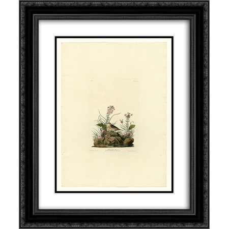 John James Audubon 2x Matted 20x24 Black Ornate Framed Art Print 'Plate 130 Yellow-winged Sparrow'