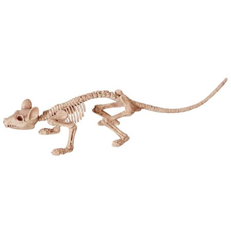 Mini Skeleton Rat - Rat Skeleton Halloween