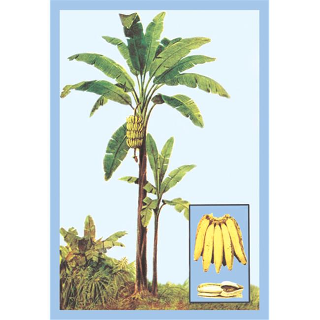 Buy Enlarge 0-587-08620-3P20x30 Banana- Paper Size P20x30
