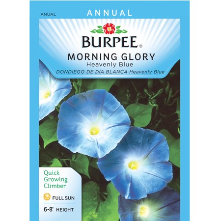 Bur Morning Glory Heavenly Blue Seed Packet