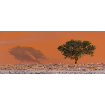 Dune Shadow (Shadow of tree on sand dune Sossusvlei Namib-Naukluft National Park Namibia Stretched Canvas - Panoramic Images (27 x 9) )