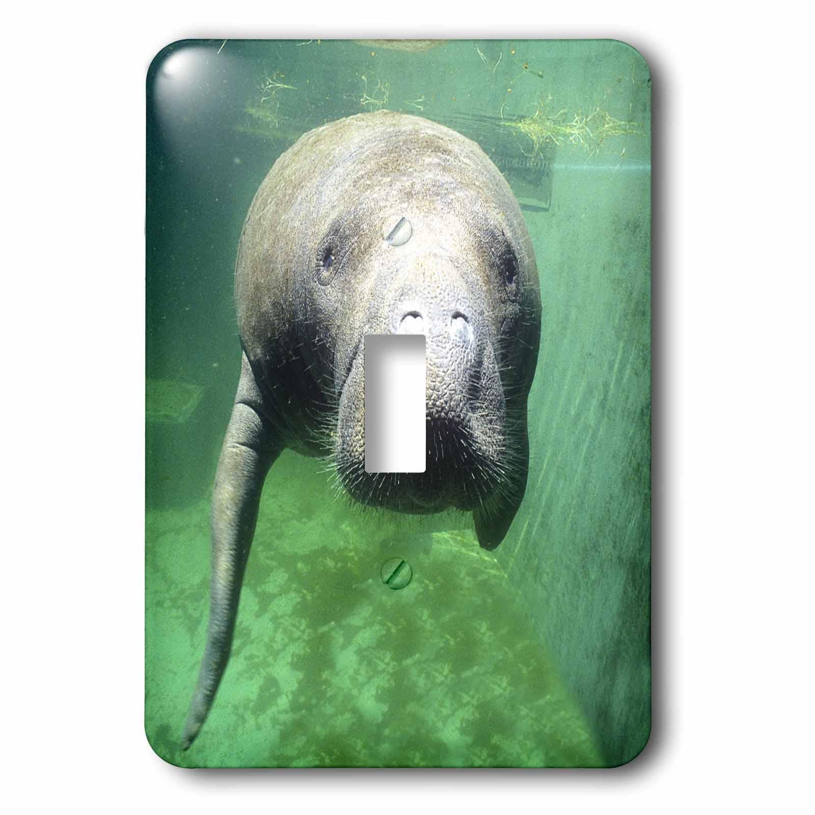 3dRose USA, Florida, Key West, Manatee - US10 GJO0382 - Greg Johnston, 2 Plug Outlet Cover