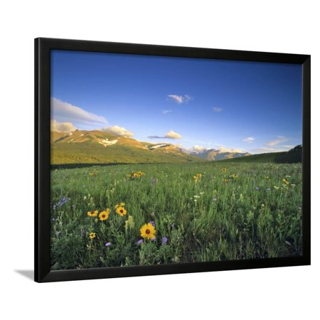 Wildflowers Along Rocky Mountain Front Near Browning, Montana, USA Framed Print Wall Art By Chuck Haney (Frost Chuck)