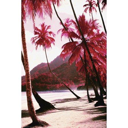Red Palm Trees Along Beach Photo Art Print Poster 24X36
