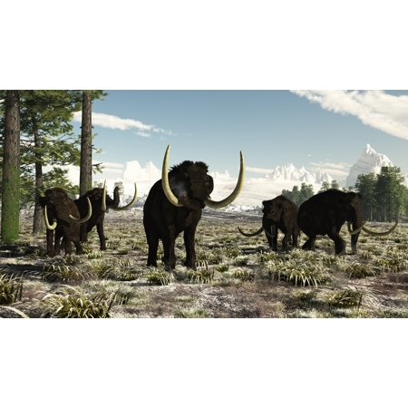 Woolly Mammoths In The Prehistoric Northern Hemisphere Canvas Art   Arthur Doretystocktrek Images  38 X 22