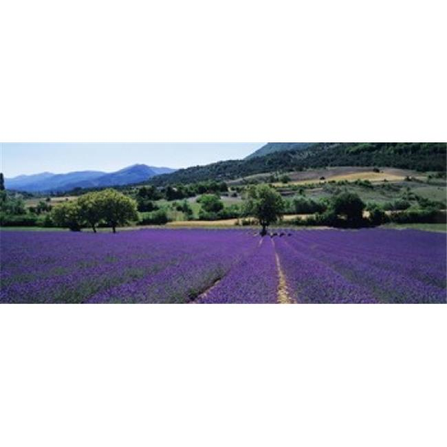 Panoramic Images PPI92190L Mountain Behind A Lavender Field  Provence  France Poster Print by Panoramic Images - 36 x 12 - image 1 of 1