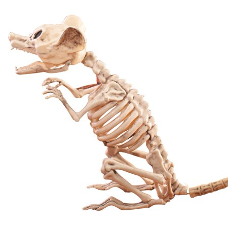 Skeleton Rat Halloween Decoration