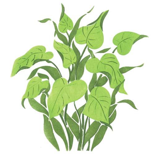Green Tropical Plant Wall Stencil SKU #1737 by Designer Stencils