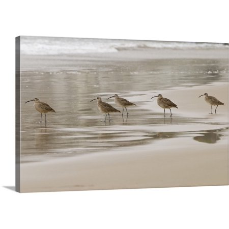 Great BIG Canvas | Trish Drury Premium Thick-Wrap Canvas entitled CA, Pismo Beach. Whimbrels parade early morning fog at low tide - Halloween Parade Miami Beach