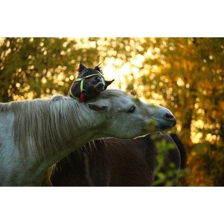 LAMINATED POSTER Horse Mold Stallion Autumn Thoroughbred Arabian Poster Print 24 x 36
