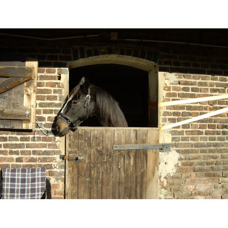 Canvas Print Box Stall Horse Stretched Canvas 10 x 14 ()