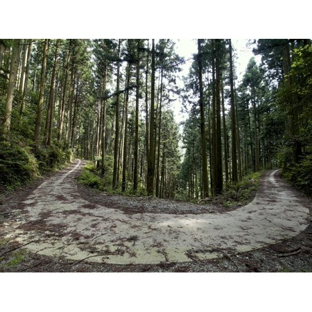 Laminated Poster Forest Road Forest Wood Poster Print 24 X 36