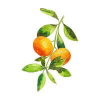 Fortunella Citrus Fruits Watercolor Home Decor Wall Prints Poster