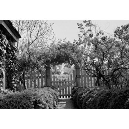 Usa Virginia Near Burrowsville Garden Gate With Wisteria Vine And Roses At Branden Plantation On James River Canvas Art     24 X 36