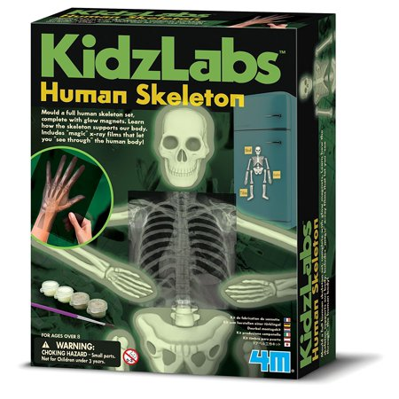 - Glow Human Skeleton Science Kit, Mold a full human skeleton set, complete with glow magnets By 4M,USA