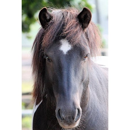 Laminated Poster Horse Head Pferdeportrait Animal Portraits Horse Poster Print 11 x 17