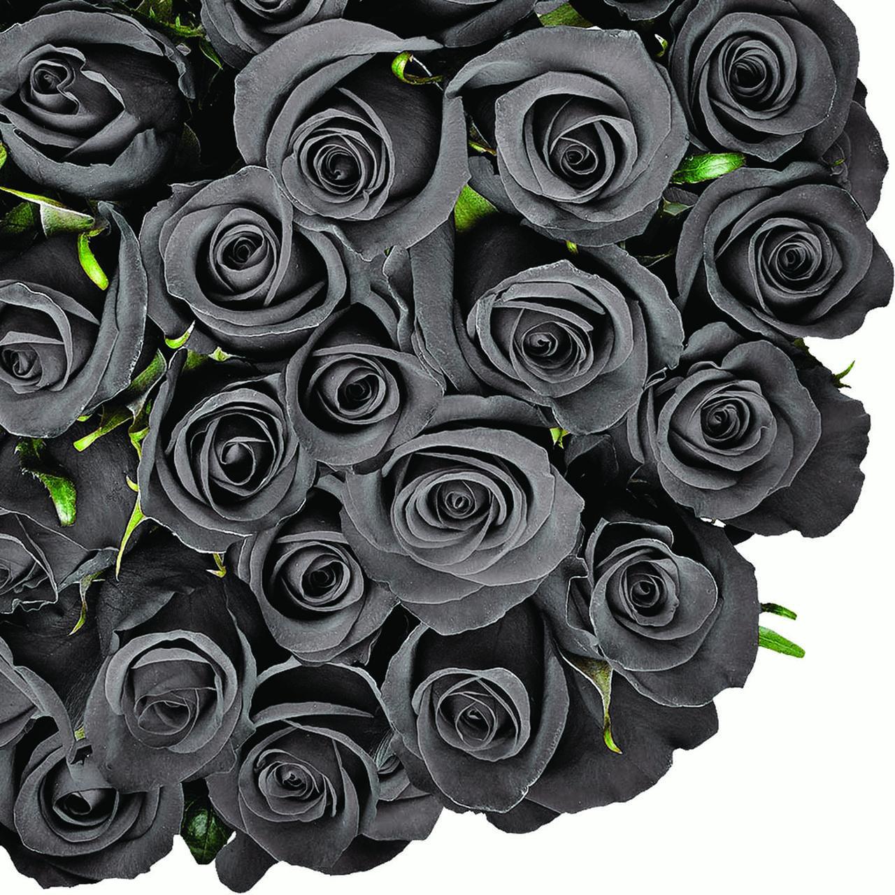 "Natural Fresh Flowers - Tinted Black Roses, 20"", 50 Stems"