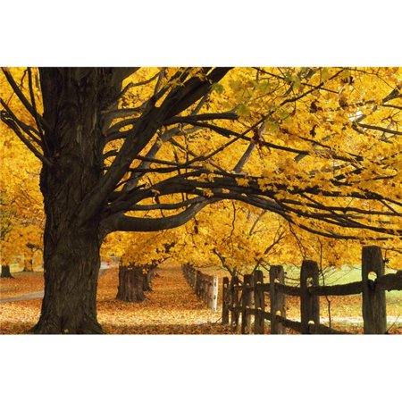 Posterazzi DPI1789549 Trees in Autumn Poster Print by Natural Selection Tony Sweet, 18 x 12 - image 1 of 1
