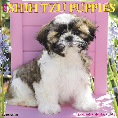 Just Shih Tzu Puppies 2019 Wall Calendar (Dog Breed Calendar) (Other)