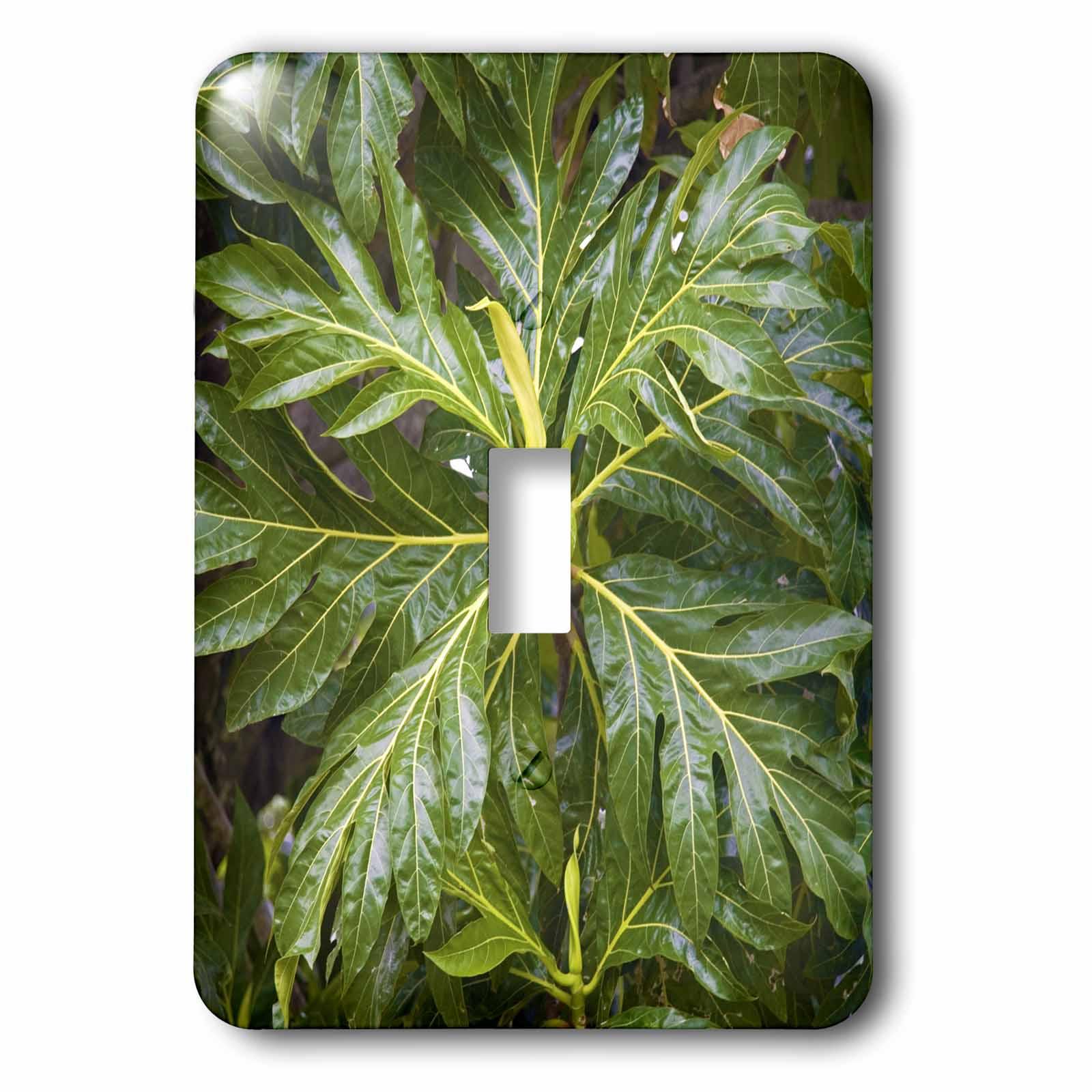 3dRose Breadfruit tree, Moorea, French Polynesia - OC13 DPB0078 - Douglas Peebles, 2 Plug Outlet Cover