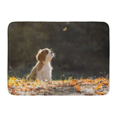 Cavaliers Rug Mat (GODPOK Dog Animals Cavalier King Charles Spaniel Puppy The Rug Doormat Bath Mat 23.6x15.7)