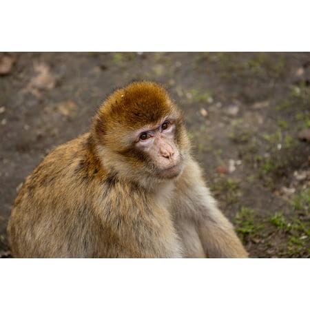 LAMINATED POSTER Zoo Animals Monkey Theme Park Nature ffchen Poster Print 24 x 36 - Monkey Theme
