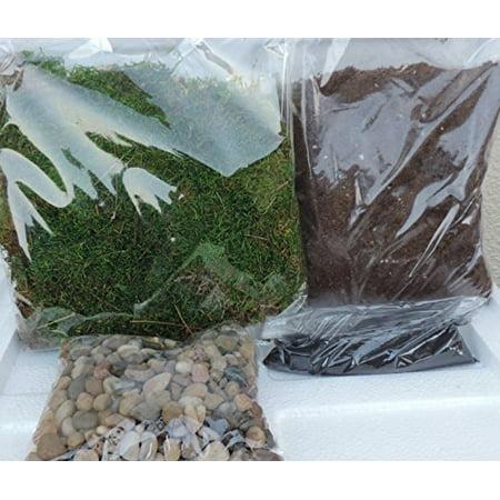 Terrarium Essentials Kit Include Rocks Charcoal Potting Soil Natural Green