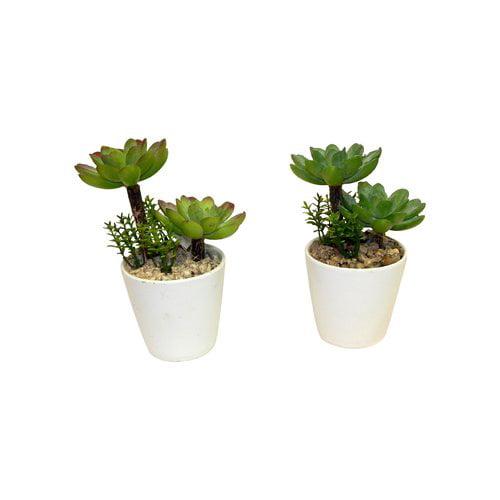 Varick Gallery 2 Piece Succulent Plant Set