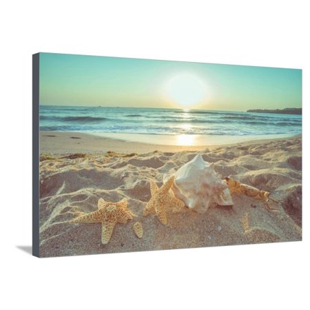 Photographic Canvas Art - Starfish and Shells on the Beach at Sunrise Coastal Ocean Seascape Landscape Photography Stretched Canvas Print Wall Art By Deyan Georgiev