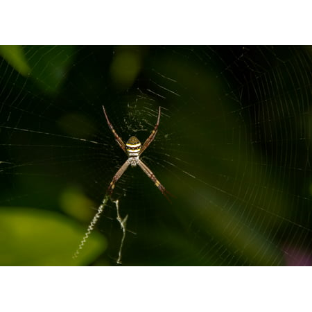 LAMINATED POSTER Web St Andrews Cross Spider Spider Web Cross Spider Poster Print 24 x 36