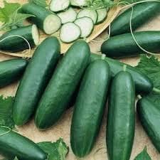 The Dirty Gardener Garden Sweet Burpless Cucumber, 1 Pound