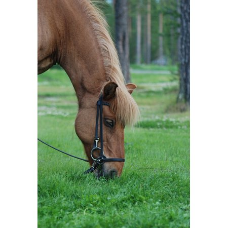 LAMINATED POSTER Beta Grass Horse Meadow Forest Green Poster Print 24 x
