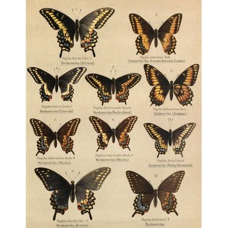 Die Artbildung Und Verwandtschaft 1889 Asterias Group 1 Canvas Art   Unknown  24 X 36