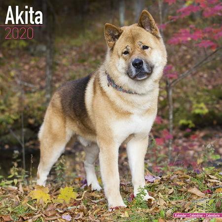 Akita Calendar 2020 - Akita Dog Breed Calendar - Akitas Premium Wall Calendar 2020