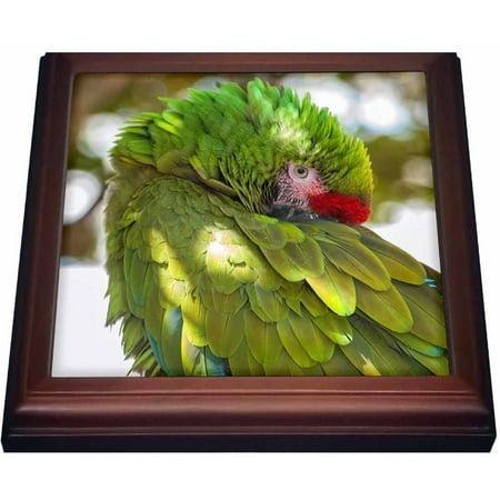 3dRose USA, Florida, Orlando, Green Macaw, Gatorland., Trivet with Ceramic Tile, 8 by 8-inch