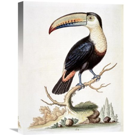 Global Gallery 'Le Toucan' by George Edwards Painting Print on Wrapped (Edwards Gallery)