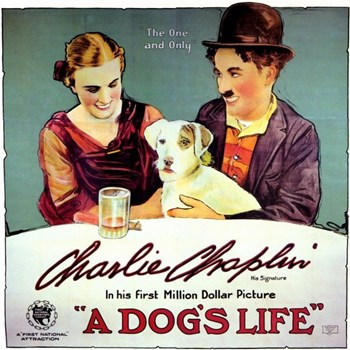 Dogs Life a Movie Poster (17 x 11)