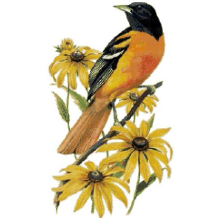maryland state bird and flower baltimore oriole and black eyed susan