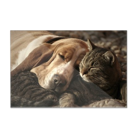 Cat & Dog Sleeping - Lantern Press Photography (12x8 Acrylic Wall Sign)