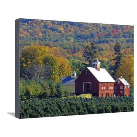 Christmas Tree Farm near Springfield in Autumn, Vermont, USA Stretched Canvas Print Wall Art By Julie -
