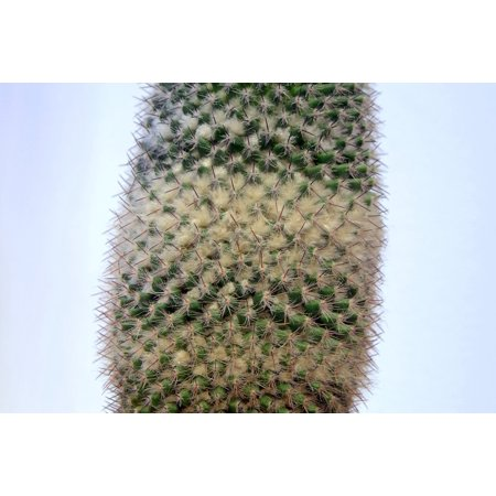 LAMINATED POSTER Down Needles Spikes Cactus Light Background Layer Poster Print 24 x -