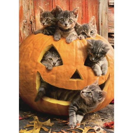 Avanti Press Kittens In Jack O Lantern Cat Halloween Card](Halloween Jack O Lantern Cat)