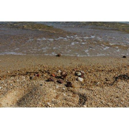 LAMINATED POSTER Water Beach Shore Seashell Sand Clear Poster Print 24 x 36 - Clear Beach