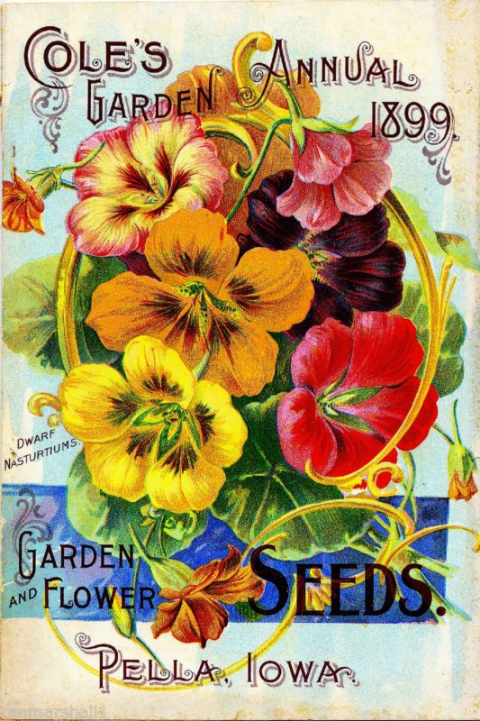 Bruce/'s Collections Vintage Flowers Seed Packet Catalogue Advertisement Poster