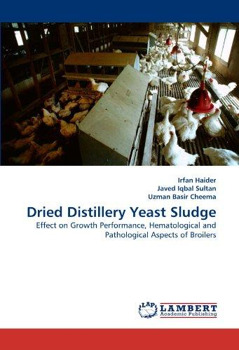 Dried Distillery Yeast Sludge by