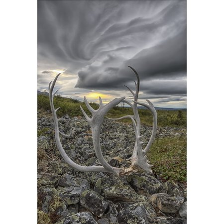 Lenticular clouds form overtop of Crow Mountain while a set of caribou antlers lie on the rocks Old Crow Yukon Canada Canvas Art - Robert Postma Design Pics (12 x 18)