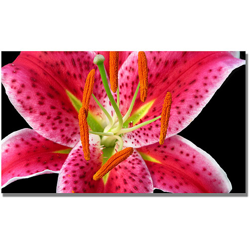 "Trademark Art ""Stargazer Lily"" Canvas Wall Art by Kathie McCurdy"
