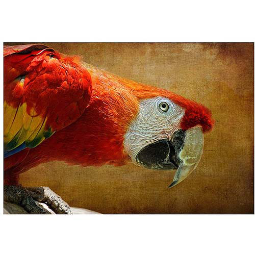"Trademark Fine Art ""Colorful Bird"" Canvas Art by Lois Bryan"