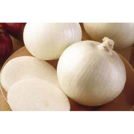 Onion White Sweet Spanish BULK 5,000 Seeds Great Heirloom (Sweet Onion)